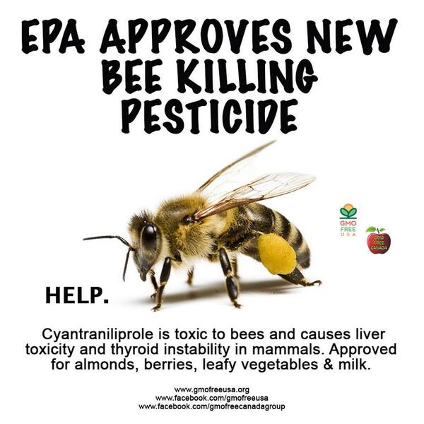 #SaveTheBees Our planet needs them. http://t.co/k18X0B0Scl