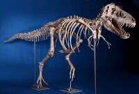 фото скелета к хэллоуину