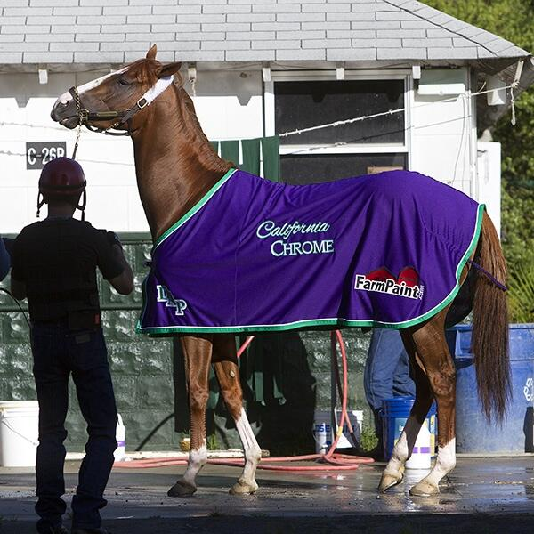 Bath time for @CalChrome #belmont2014 #BelmontStakes #TripleCrown2014 #chromelife #chromies http://t.co/eAc9kfWzwh