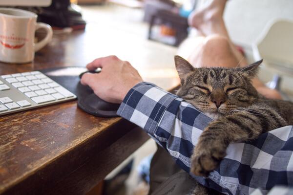 My cat, she's a helper. http://t.co/xc8hyjelyr