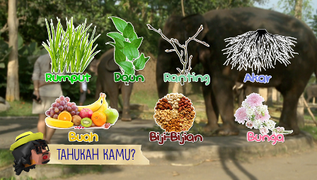Kompas Tv En Twitter Ini Dia 6 Makanan Favorit Gajah Nonton Ya