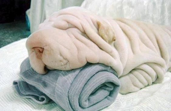 Excuse me towels, did you see the dog? http://t.co/xYuLvW9rzC