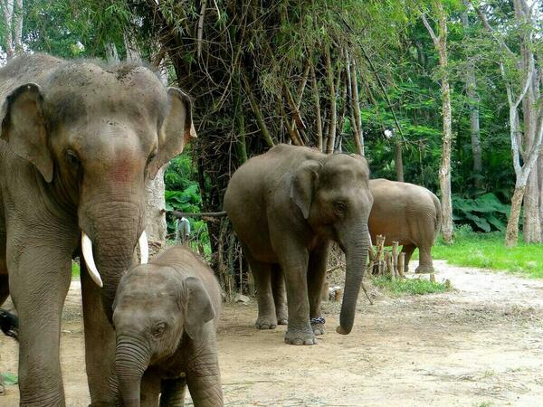 #Sunder making friends.... #elephants... healing... 6/9/14 http://t.co/2zGWFDfrBY