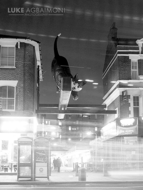 She sits on a #London road waiting patiently til night.  Then the feline beauty awakens & chases the #light  #catford http://t.co/SvIJAVZyER