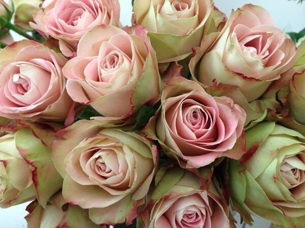 Jc Flower School Flowerschooluk Twitter
