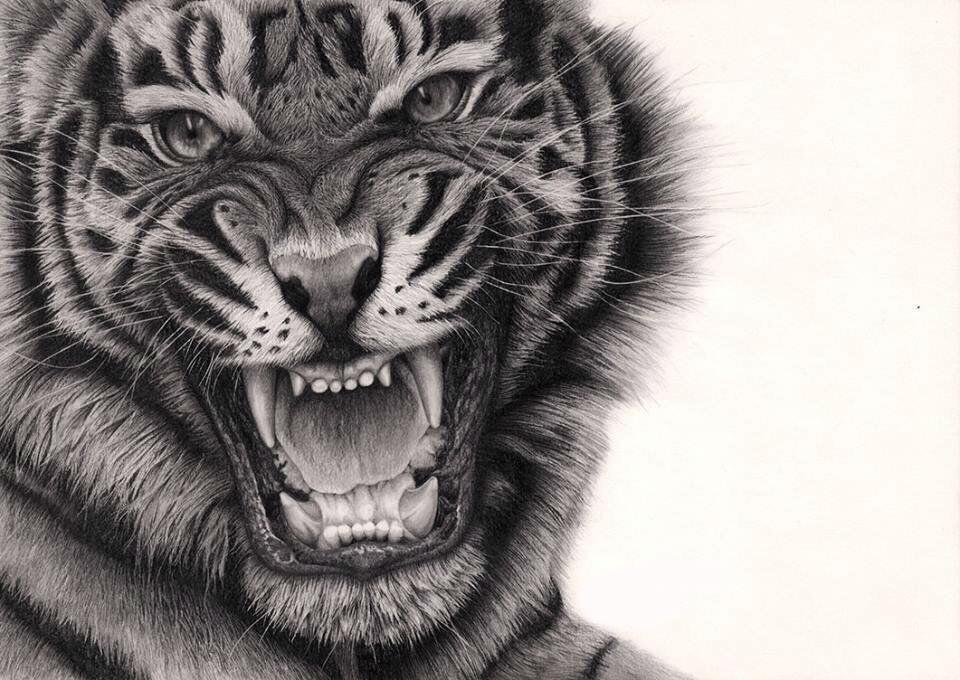 Roaring Lion Profile Tattoo Sick Drawings on Twitt...