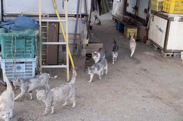 パブリックビューイングを見ていた猫たちは、魔法が解けたように会場から続々と出ていきました。死んだ魚のような目をして。#ishikinotakaineko pic.twitter.com/m1oP4N0XmY