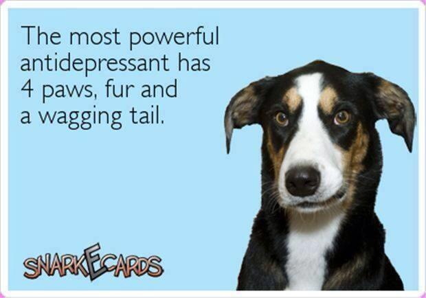 Twitter / JoyAndLife: Amen. I know dog lovers will ...