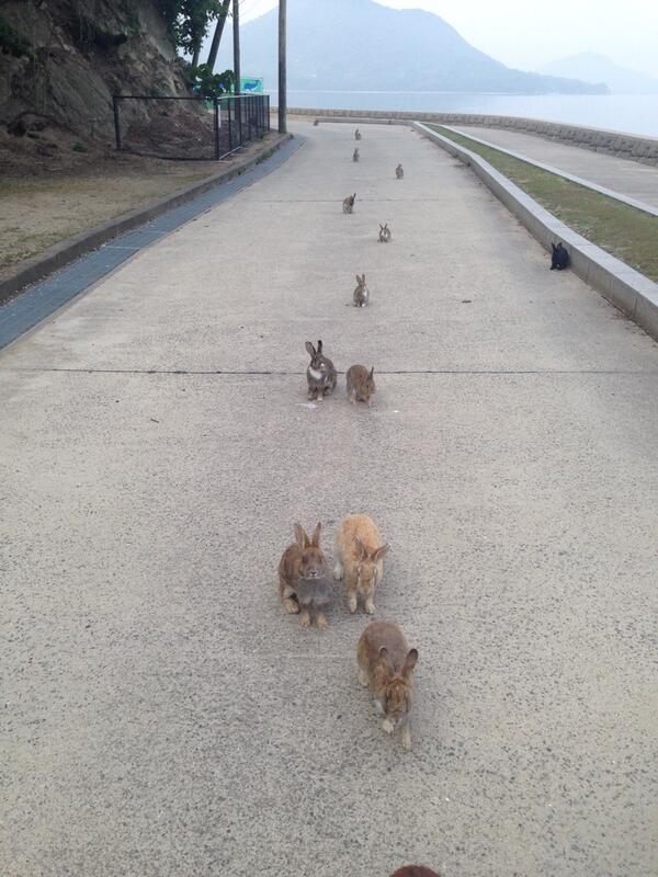 お散歩なう。気づいたら後ろに行列つくってついてきてた!♡♡で、振り向くとピタッと止まる。 #大久野島#うさぎ島 pic.twitter.com/33OdQlHbJX