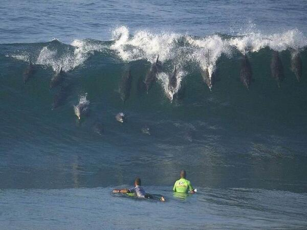 """""""@dudu_amorim: Wow! Fantastic!  Dolphins surfing Cave Rock, Durban South Africa  Photo by John Pauling http://t.co/T2ISPMSF3q"""" / superb!"""