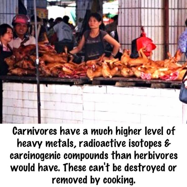 """@stopeatingcats: Even cooking dog meat does not make it disease free #YulinGetDogsOffTheMenu http://t.co/xH5VI2c63f"" #IDidNotKnowThat"