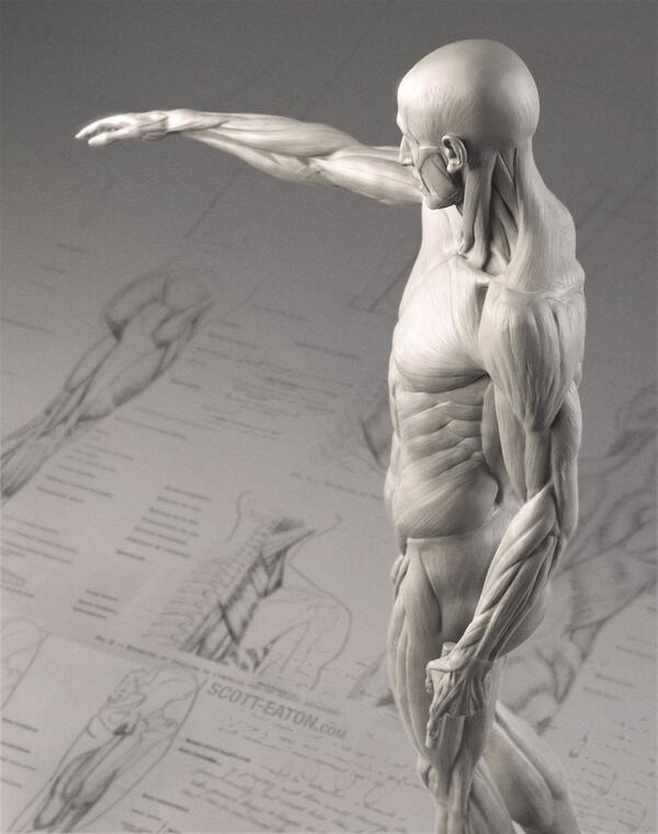 Anatomy For Art On Twitter App Store Scotteatons Update Of