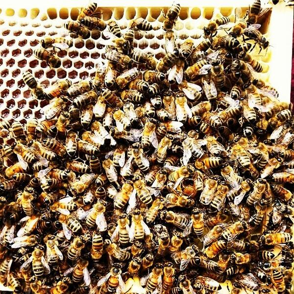 le #api dell'#apicoltura #castelbelfort  #paganelladaurlo #dolomiti #trento #trentino #v... http://t.co/2osM8HaHV0 http://t.co/v1oV7KJypv