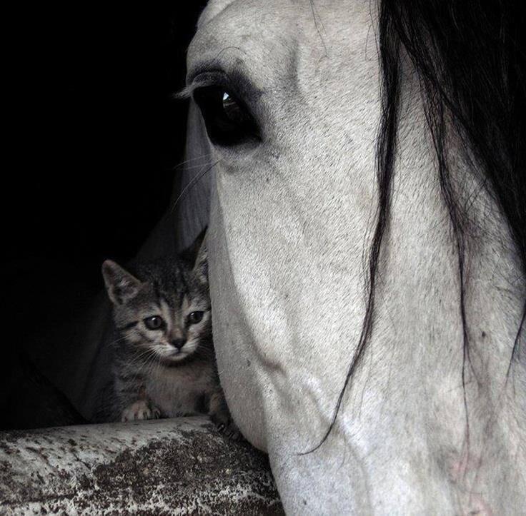 CACHORROS Y ANIMALES BqMMcqzIAAAP8Gq