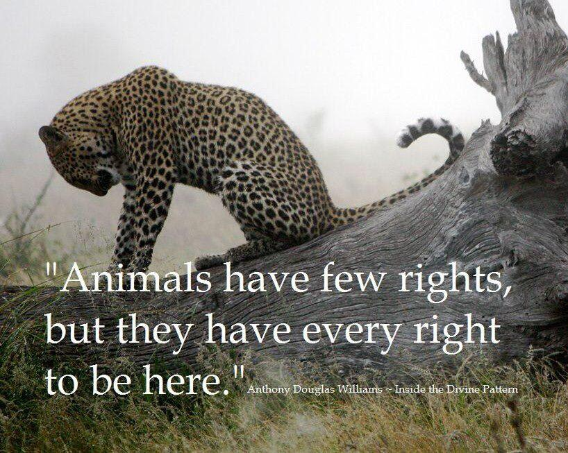 animals right to life essay Why animal rights almost all of us grew up eating meat take vital steps to cut thoughtless cruelty to animals out of your life and to educate others around you.