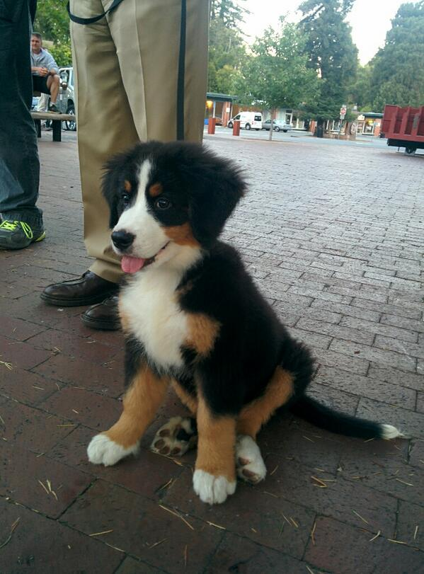 Cute puppy!! #BMDs http://t.co/tgjUSkPaAL