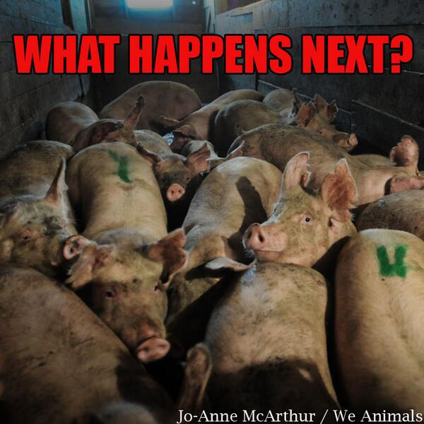 "PLEASE, PLEASE sign+RT - ""@PETAUK:  Make CCTV mandatory for all slaughterhouses. http://t.co/srP42sP9aZ http://t.co/w4NKrII6TO"""