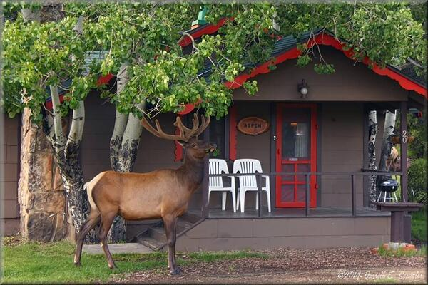 resorts inns homepage lodging mountain estes lodge park cabins mcgregor in