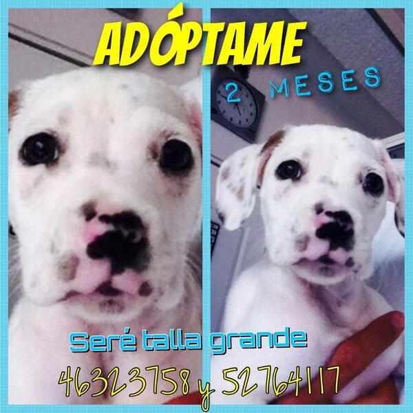 Adopta un guapo #perrito #adoptaNocompres se hacen filtros @En_laDelValle @LaRomaDF @VidaCondesa gracs por RT http://t.co/kPJQi5xxFp