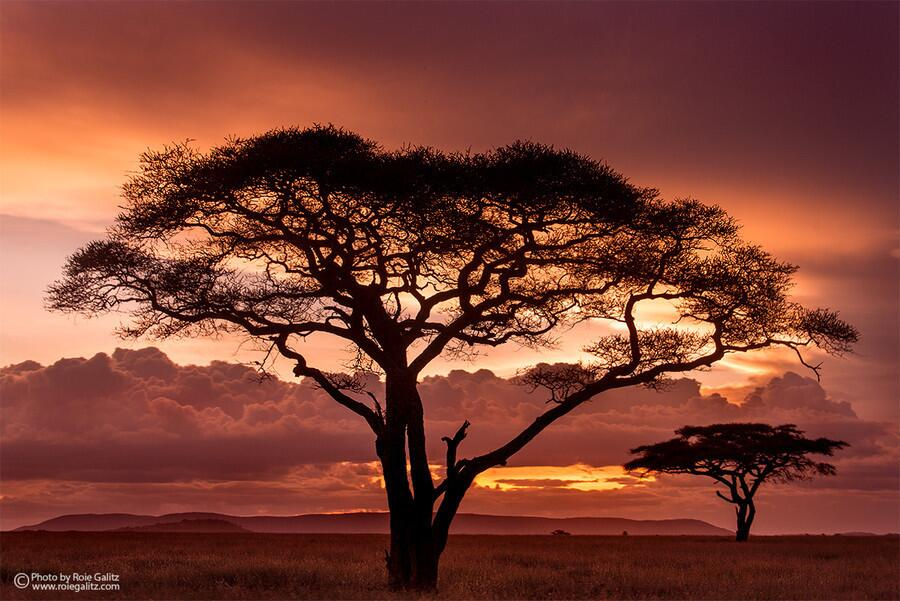 Twitter / ZaibatsuPlanet: African Sunset by galitz #photo ...
