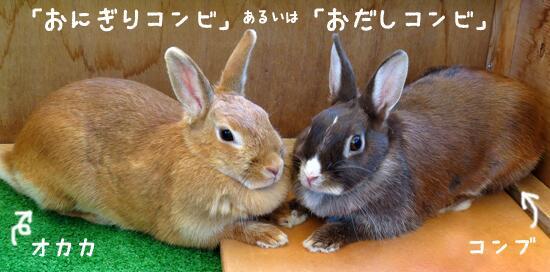 「おにぎりの日」なので…。多摩動物公園のカイウサギ「オカカ」と「コンブ」。来園者の方から「おにぎりコンビ」や「おだしコンビ」と呼ばれています☞tokyo-zoo.net/topic/topics_d… pic.twitter.com/Zrl0OWN9W2