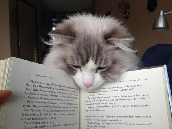 Want to be a better fiction writer? Keep reading fiction. We learn more with each book we read. ~My opinion. http://t.co/h9rV7ZXqVP