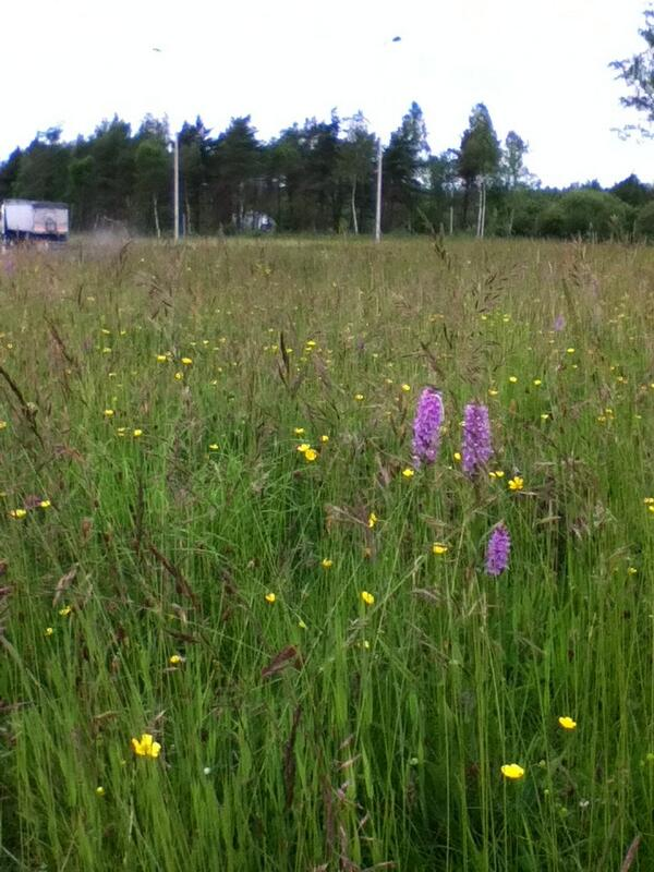 Stunning! Roundabout near Hirwaun on A465. Full of flowers and pollinators. #saynomow @Love_plants @Buzz_dont_tweet http://t.co/cMtt623T1a