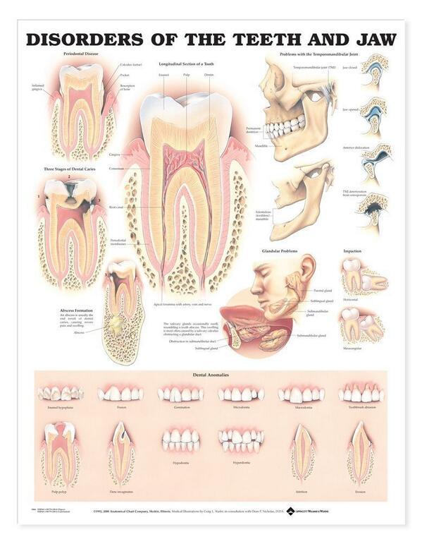 Excelente Vídeos Anatomía Wisconsin Embellecimiento - Anatomía de ...