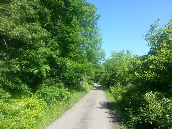 Running on the Escarpment Trail, Hamilton