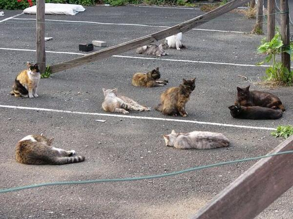 パブリック・ビューイングに群がった猫たちの意気消沈具合が大変に気の毒です。#ishikinotakaineko pic.twitter.com/AvYi05l1wo