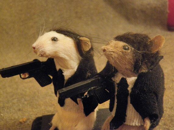 Pulp Fiction Taxidermy! https://t.co/2EnPwShFgv cc @TheBloggess @SamuelLJackson http://t.co/Yk6dyrccBf