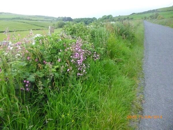 Hi @Love_plants Road to Elrig, Dumfries & Galloway quite wildflower friendly, as is our #frugal #wildlife garden. :) http://t.co/ZYkrkfdvyg