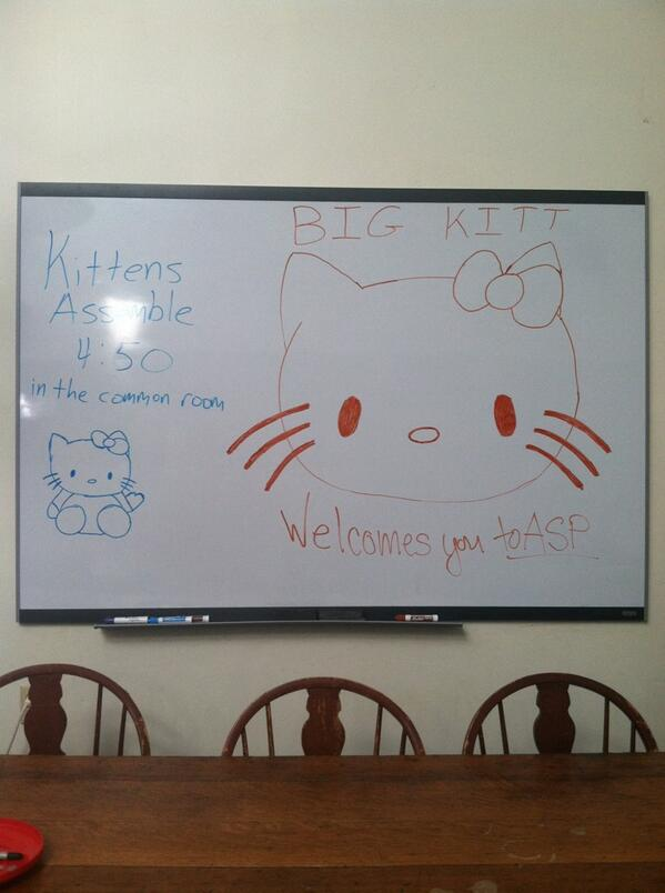 Kit 1 is ready for ASP, are you? #aspmovein #kittens http://t.co/vnnmHnV1DB