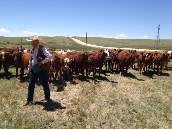 """Amazing tour at Lasater Ranch. """"Less meat, better meat."""" Great start to #SlowMeat 2014 http://t.co/remzjjFclL"""