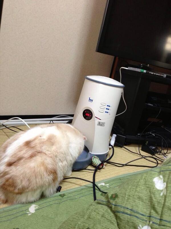 いつからだろう、僕と猫が一緒に寝なくなったのは。あいつ(自動エサやり機)が来てからな気がする。 pic.twitter.com/UxFB9XvOge
