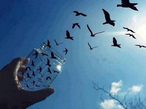 ビンから鳥がでていくような写真 pic.twitter.com/dFdA3iGgsk