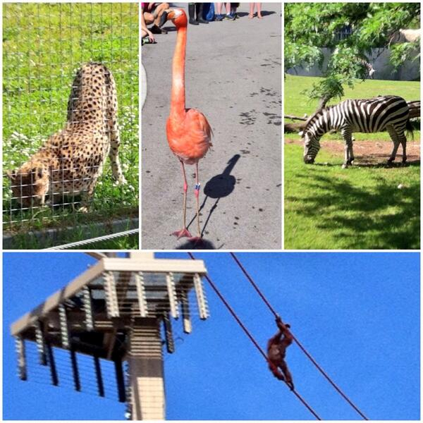 Beautiful day at the @IndianapolisZoo #ISE14 ☀️ http://t.co/UMLLiGpwkB
