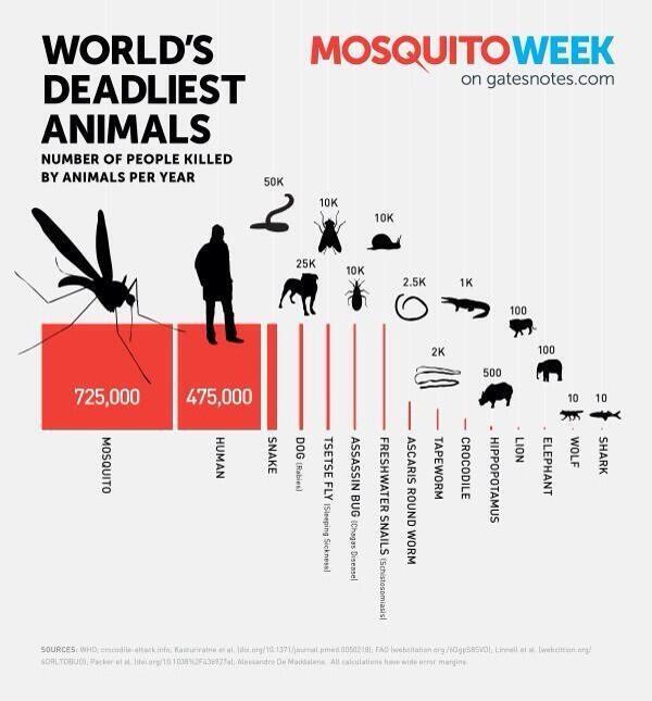 Dünyada en çok İNSAN öldüren HAYVAN sivrisinek (yılda 725.000) 2.sırada İNSAN (475.000) geliyor. http://t.co/SGuUkL0zIs