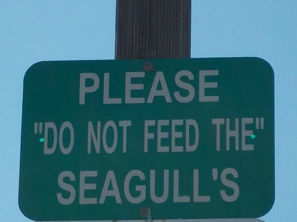 """Is """"do not feed the"""" a euphemism for something? The seagull's what? SO MUCH going on in this sign. (via @mteblogmama) http://t.co/NmepNj1W2B"""