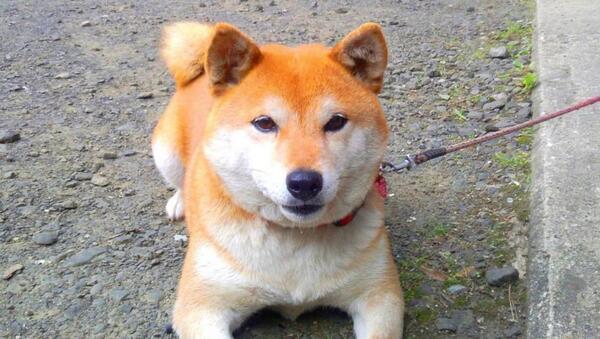 秋田県の河川敷で、クマに襲撃された男児(5)を、飼い犬のめごちゃん(6歳)が救出。普段聞いたことのないような声で吠えて、クマを追い払ったそうpic.twitter.com/DjyCTssZudめごちゃん、えらい!これに懲りてクマが人里に来ませんように(´(ェ)`)