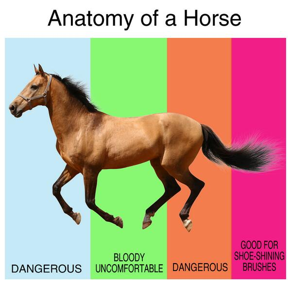 The Poke On Twitter The Anatomy Of A Horse By Phillucas More