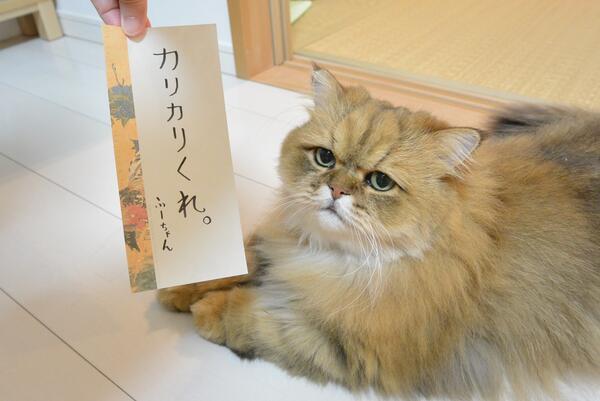 七夕のお願い。@婿 pic.twitter.com/9FVeAgs9ob