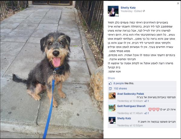 יו, מישהו רוצה כלב? תראו איזה חמוד, נו http://t.co/irVHjjTJNk