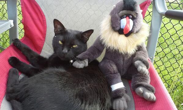 @Kolo_Martin @Chanttilly_Lace OMC #baboonery! #TobyB http://t.co/JGlKEFZp4x