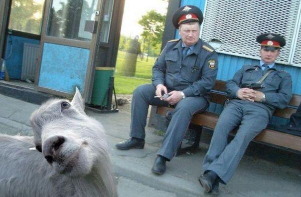 Террористы напали на милиционеров в Луганске: избили и отобрали оружие - Цензор.НЕТ 1993