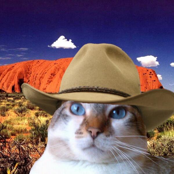@ScottyBlueCat You are such a cutie in your akubra, Scotty #JJPawty http://t.co/uFKZLe38SS http://t.co/WpvI5d8EYv