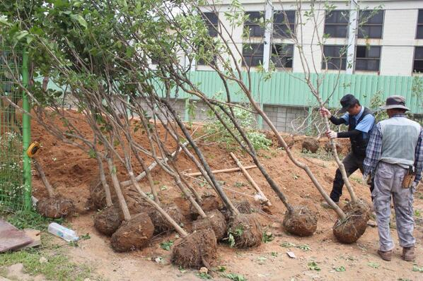 【RT希望】イトゥク森プロジェクトご連絡:本日植樹の写真がUPされました‼︎大きい木は植樹完了し、少し小さめの木を今後植える予定だそうです。今週中には完成の予定との事、本当に楽しみですね‼︎http://t.co/rG9n1D7QX6 http://t.co/f5Izyq1y9a