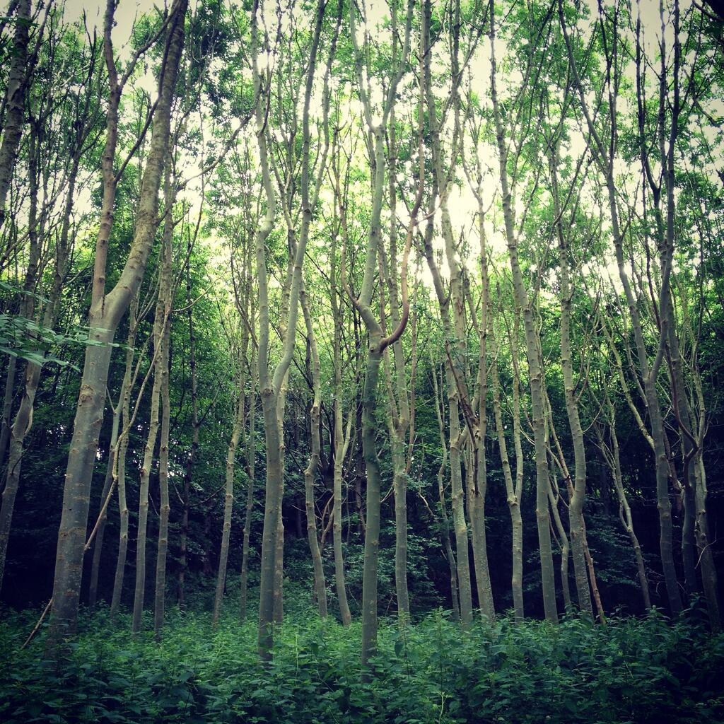 Twitter / LayneArlina: Epic woodland of Cricket Bat ...