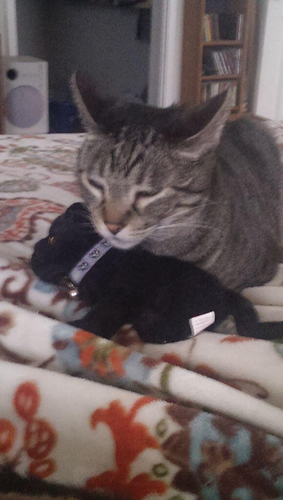 Minx caught napping with #minibreeze http://t.co/cn2gaoFp0C