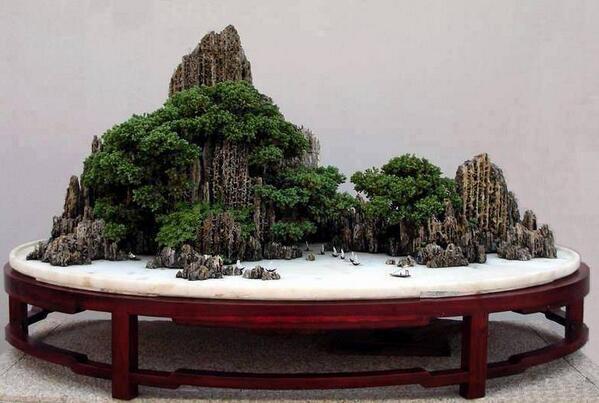 Bonzai Tree bonsai trees (@bonsaitrees)   twitter